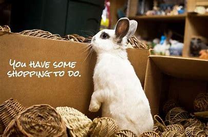 bunnyshopping.jpg