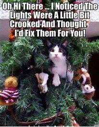 treecat.jpg